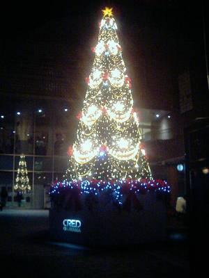 クレド岡山のクリスマスツリー(2004年11月30日23:53撮影)